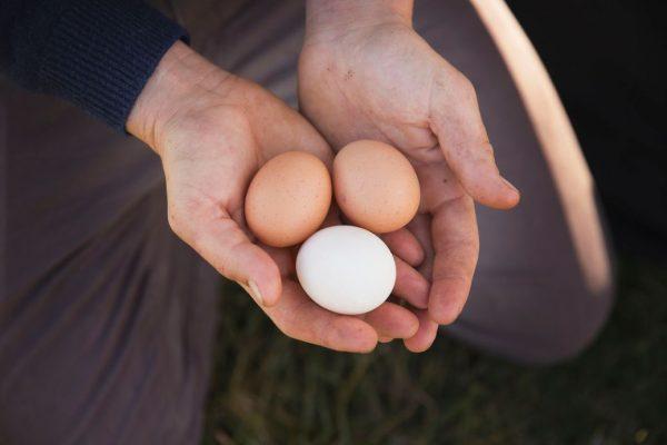 Organic eggs from The Food Farm