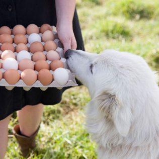 1 Dozen Pasture Raised Eggs