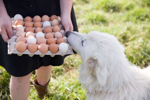 Maremma Willow with organic free-range eggs from The Food Farm