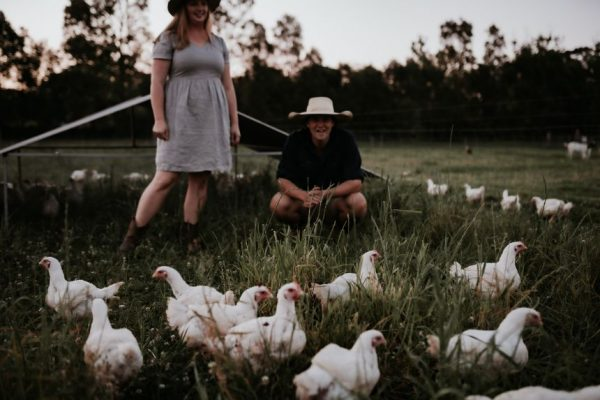 Pasture-raised chickens in a paddock with The Food Farm owners Tim and Hannah